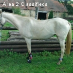 all round train akhal teke horse