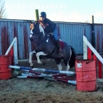 Charming 4 yrs Warmblood Gelding and others for sale