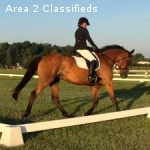 Eventing Packer for Sale - Safe, sane and FUN ride!