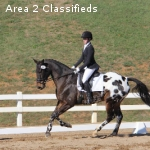 Experienced Preliminary Eventer