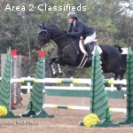Experienced Preliminary Horse for Sale