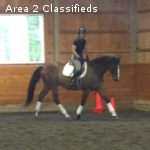 For Free Lease or Sale: Thoroughbred Dressage Prospect