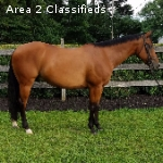 Handsome, Eager Gelding Wants A Job