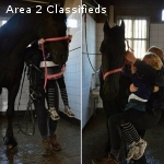 KOKO-true dressage schoolmaster gelding ready to go