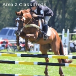 Lessons Available with Upper-Level Eventer Katie Wherley!