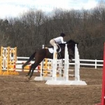 Novice Eventer