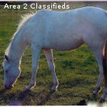 Onsite free lease, pay monthly up keep of horse