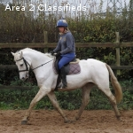 Strong healthy 8 yrs mare Connemara horse