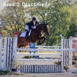 Stunning and Straightforward 2* mare