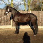 Stunning Friesian mare ideal confidence giver!
