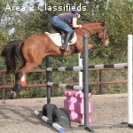 Stunning Prospect Connemara Mare Horse for sale