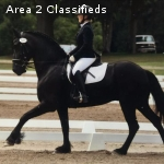 Talented, sweet and Beautiful Friesian sporthorse gelding.