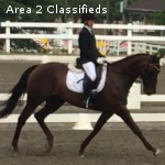 Experienced eventer and your next partner