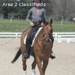 Top Level Program for Horses in Training, Sales and Students