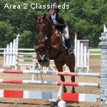 Training level horse for sale or lease