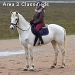 WWStrong healthy 8 yrs mare Connemara horse