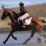Zoomy 17 h 14-year-old TB gelding