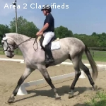 2009 17.3h Imported Hanoverian gelding