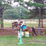 Adorable, Athletic Event Pony for Sale