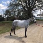Adorable Fancy Pony