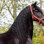 BEAUTIFUL CHRISTMAS SEASON HORSES AVAILABLE