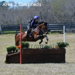 Corofin | Ammy Eventer Unicorn