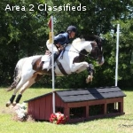 Event Pony For Sale