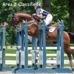 Experienced Novice/Training Horse