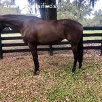 Experienced Preliminary Horse