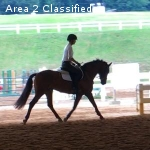 Fancy Young Dressage or Eventing Pony