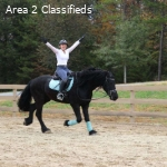 fantastic sweetheart. 16.2hh, smart back Friesian 7yrs old g