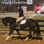 Flashy Thoroughbred Mare