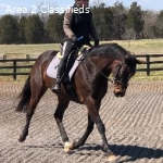 Horse farm for sale (Price reduction)