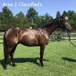Lovely Young Event Prospect for Sale
