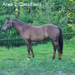 Novice Event Horse For Sale