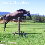 Purpose bred 4-year-old eventing mare