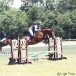 Quality, fun ISH mare