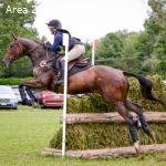 Stunning 8yo Training level eventer