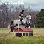 Talented gray for sale!