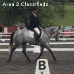Training Level brave, scopey, Gray mare