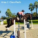 Wonderful Seasoned Event Horse!
