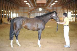 Nicole Dutzi with her stallion Best Hope